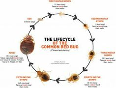 7 Best Bed Bugs Bites Pictures Images On Pinterest Bed Bug Bites