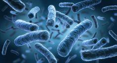 Recombinant protein expression in E. coli by tebu-bio