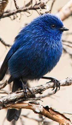 Pretty Birds, Love Birds, Beautiful Birds, Animals Beautiful, Cute Animals, Small Birds, Little Birds, Colorful Birds, Tier Fotos