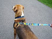 Leashes and collars for the dog shelter -  CountingBunniesToo: Upcycled Juice Pouch Extravaganza...
