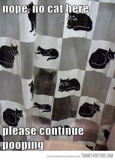 Funny pictures about Master of Camouflage. Oh, and cool pics about Master of Camouflage. Also, Master of Camouflage photos. Funny Cat Pictures, Animal Pictures, Funny Photos, Crazy Cat Lady, Crazy Cats, Funny Cute, The Funny, Super Funny, I Love Cats