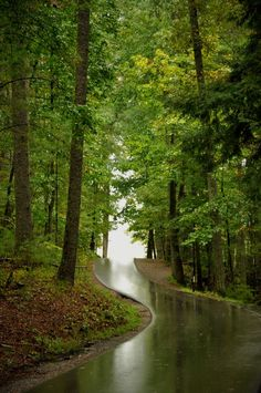 Take a drive through one of the most beautiful parts of the Great Smoky Mountains National Park. Cades Cove is an 11 mile loop full of mountain views and amazing wildlife.
