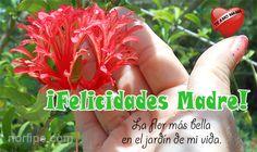 ¡Felicidades Madre! Eres la flor más bella en el jardín de mi vida