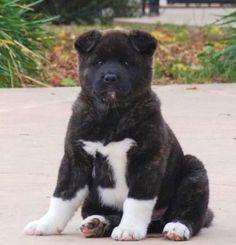 Oh my, what a lug! He looks like a teddy bear.