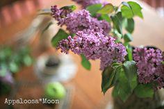lilacs2