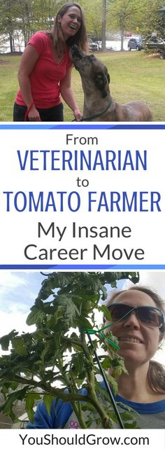 From Veterinarian To Tomato Farmer: My Insane Career Move -- What if I told you that I'm leaving my work as a veterinarian to grow tomatoes? Sounds totally crazy, doesn't it? Who in their right mind would leave their job as a veterinary doctor to grow tomatoes?