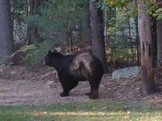 Hungry Bear Farm is a small Certified Naturally Grown farm in Wilton NH specializing in growing vegetables, herbs and berries without the use of synthetic chemical pesticides or fertilizers.