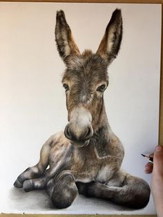 Bethany Vere ~ Delilah the Donkey is complete. I've adored working on her & have waited patiently for prints to be available until I shared her with you all.  I have two sizes of limited edition prints available on my website✨(she is also available as an original drawing!) Kindly referenced by LM Photography❤  www.bethanyvereart.co.uk