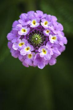 Pretty Purple Flower ما أجملها !! سبحان الله  المصور بديع السماوات والأرض !!