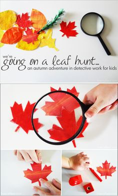 {We're Going on a Leaf Hunt by Steve Metzger} Autumn activity to go along with the book *Too cute