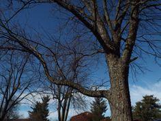 The First Tree: ISO 100, F8, 1/320, Custom Balance