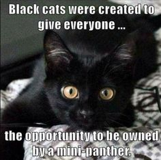 Black cats were created . . .