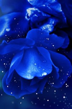 Cobalt and Azure Blue Flowers on Black Background Im Blue, Deep Blue, Blue And White, Blue Dream, Aura Azul, Azul Anil, Photo Bleu, Everything Is Blue, Himmelblau