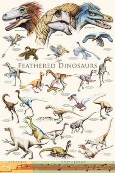 Feathered Dinosaurs II Poster