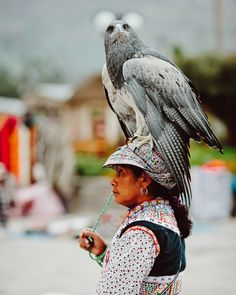 Yanque, Peru.    Don't mind me, just out walking my hawk...