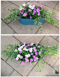 Fall Window Boxes, Window Box Flowers, Flower Boxes, Apartment Balcony Garden, Balcony Plants, Perfect Plants, Outdoor Planters, Small Gardens, Dream Garden