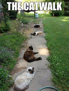 It really the cat walk