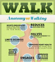 Anatomy of #Walking #Infographic Walk your way to better #health.