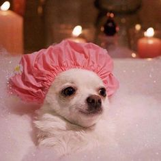 No-one: Me: Time for selfcare. (runs bubble bath) Funny Animal Jokes, Funny Dog Memes, Cute Memes, Cute Funny Animals, Baby Animals Super Cute, Cute Little Animals, Baby Animals Pictures, Cute Animal Pictures, Photo Chat