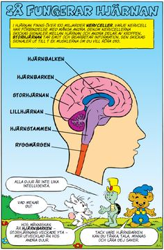 Bamse Så fungerar hjärnan Science Lessons, Science For Kids, Science And Nature, Body Preschool, Learn Swedish, Swedish Language, Adhd And Autism, Wonder Quotes, Teaching Biology