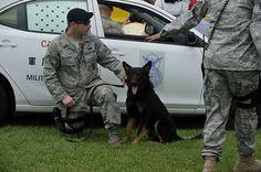 軍用警察犬