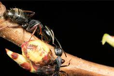 Belton Missouri Pest and Termite Control - Ant, Termite, Rodent, Spider Control Service - 64012 | Mason Exterminating