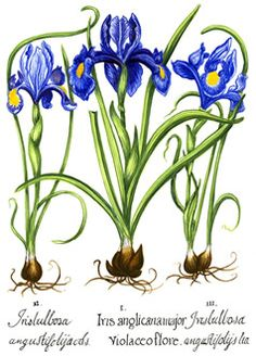 A Medieval Garden of Botanical Illustrations - Drew University Library - U-KNOW