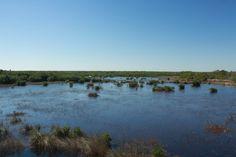Everglades - flat, flat, flat