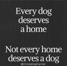 Dachshunds, Doggies, Pet Dogs, Pets, Dog Quotes, Animal Quotes, Dog Shaming, Stop Animal Cruelty, Dog Lady