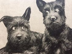 VINTAGE SCOTTIE DOG 1930'S SCOTTISH TERRIER CHECK & DOUBLE CHECK ART PRINT