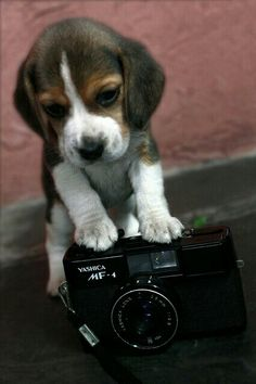 Take a photo with your dog