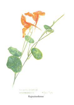 Plant Leaves, Plants, Floral Theme, Plant, Planets