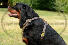Practicable Studded #Leather #Dog #Harness for #Rottweilers $69.90