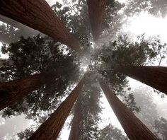 World's Most Pristine Forests - Sequoia and Kings Canyon National Parks, California