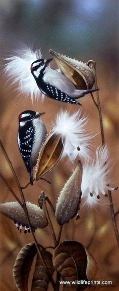 """A pair of birds are attracted to a beautiful milkweed field in Jerry Gadamus' Seeds are Sown. Image Size 10"""" x 24"""" Signed and Numbered"""
