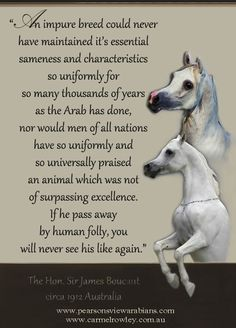 From breeders to think about. Horse Poems, Passed Away, Inspirational Quotes, Arabian Horses, Animals, Life Coach Quotes, Animales, Animaux, Inspiring Quotes