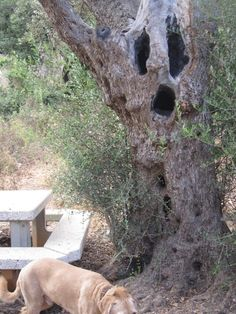 very Scary.  Scary Tree (Picture)