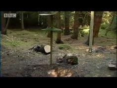Squirrel extreme assault courses