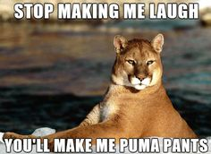 bad pun puma meme