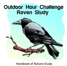 Brand New Outdoor Hour Challenge: Raven Nature Study Information About Birds, Raven Bird, Study Ideas, New Forest, Nature Study, New Series, Sounds Like, Homeschooling, North America