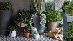 pot-plants-porch-dog-peter-fudge-garden-apr15