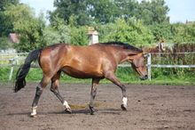Is Your Horse Suffering from Back Pain?