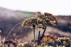Telaraña Floral, Dandelion, Pastel, Flowers, Flower Photos, Naturaleza, Plants, Fotografia, Cake