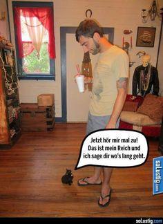 Jetzt hör mir mal zu! - #kätzchen #katze #reich