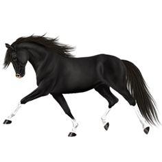 La Cona - Howrse- New Horse