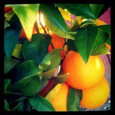 I do love California oranges especially in California