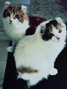 Ziggy & Prizi