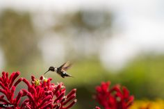 Humming Bird by Alexander Gomez on 500px