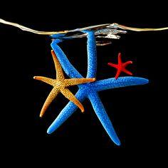 Underwater Life by Mark Laita
