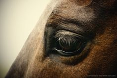 Horse eye by 54ka [photo blog] animals Photography Image Photo horse eye by 54ka young worker work Wild white western west View all up trade thoroughbred symbol success stallion smith skill single sign shoe shiny rusty rust ranch profile portrait pet pasture outdoors outdoor old object Nature nail messy mare mane mammal luck lawn job isolated iron horseshoe horse selection horse horizontal hammer hair green good gold gelding front frame forge farm eye equine equestrian domestic details detail cr